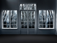 Dark forest behind windows