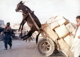 Donkey and overloaded cart, India 2008 (Source: flickr.com)